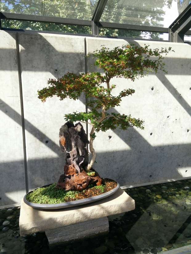 The Botanical Gardens had an amazing bonsai collection.