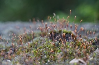 Little mossy trees