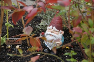 A gnome protecting the garden